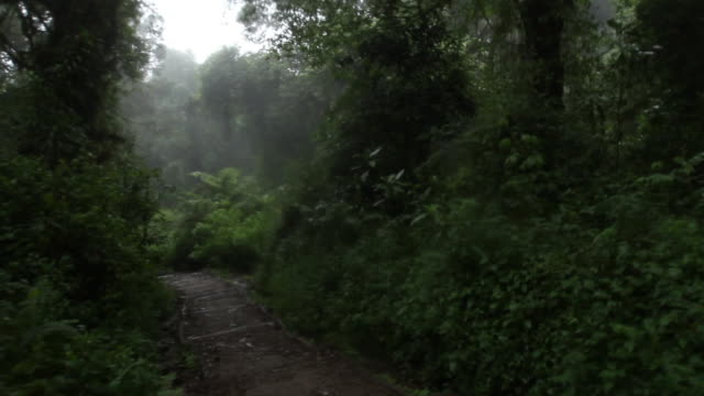 handheld pov walking jungle trail in tanzania - wiese stock videos & royalty-free footage