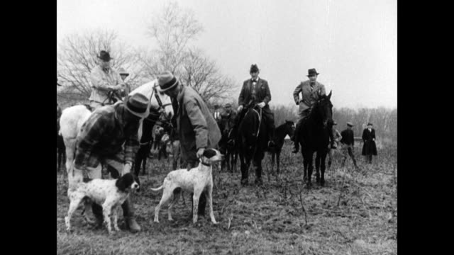 vidéos et rushes de handlers owners holding pointer dogs judges on horseback watching dogs released running out of frame sporting dog hunting companion - équitation de loisir