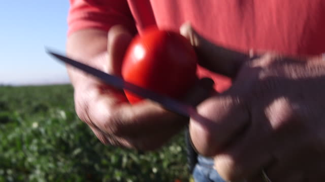 Hands Cutting Tomato