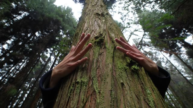 hands embracing a tree trunk - tree trunk stock videos & royalty-free footage