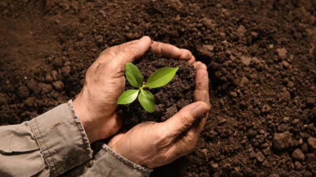 hands holding and caring a green young plant - terreno video stock e b–roll