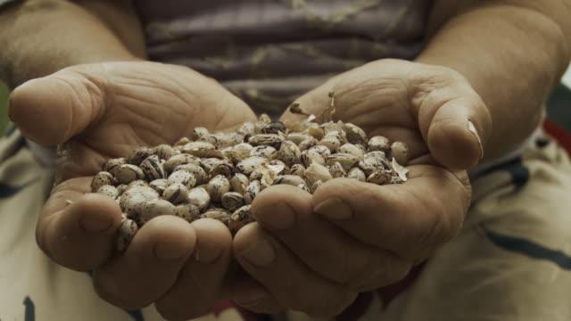 vídeos y material grabado en eventos de stock de hd: manos holding beans - manos ahuecadas