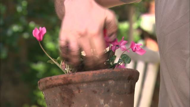 cu hands holding flower pots/ trays of flowers - einzelner mann über 30 stock-videos und b-roll-filmmaterial