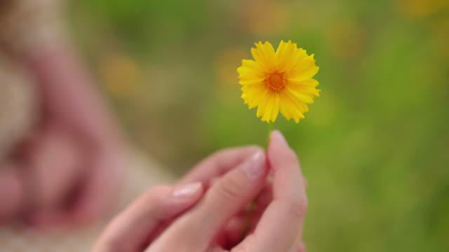 hands holding flower / yeongju-si, gyeongsangbuk-do, south korea - toccare video stock e b–roll