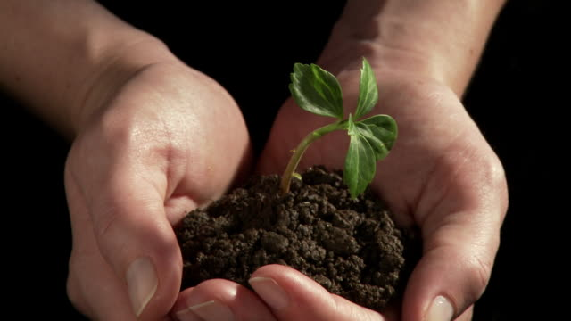 CU ZO Hands holding small green plant in soil