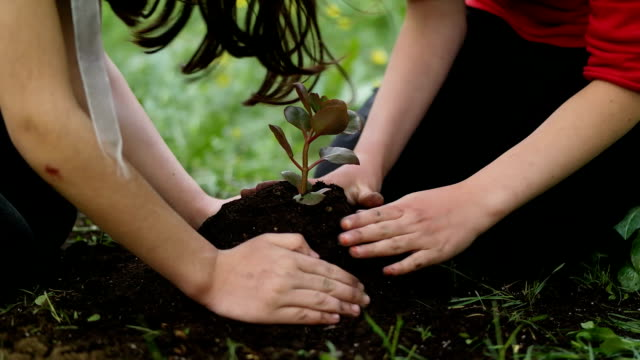 hands holding small white flower in dirt - planting stock videos & royalty-free footage