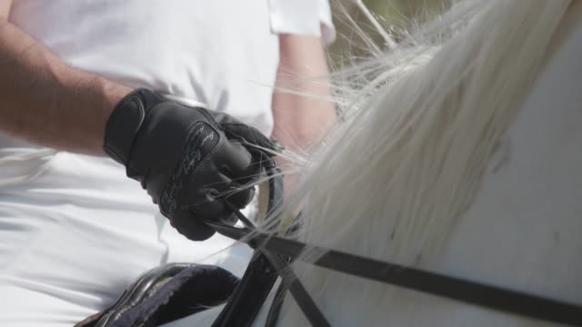hands in gloves holding reins of white horse - horseback riding stock videos & royalty-free footage