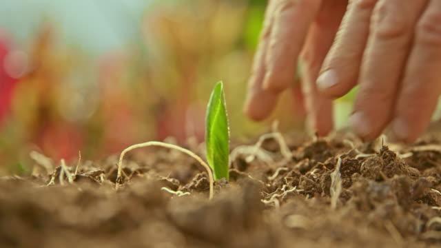vídeos y material grabado en eventos de stock de slo mo manos de una persona plantando una planta - principios