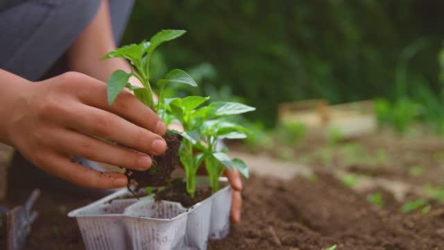庭に唐辛子植物を植える10代の少女のslo moの手 - one teenage girl only点の映像素材/bロール