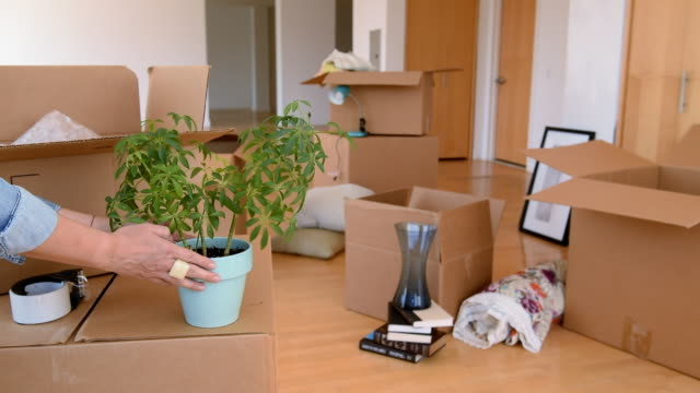 hands of asian woman placing potted plant on cardboard box - vase stock videos & royalty-free footage