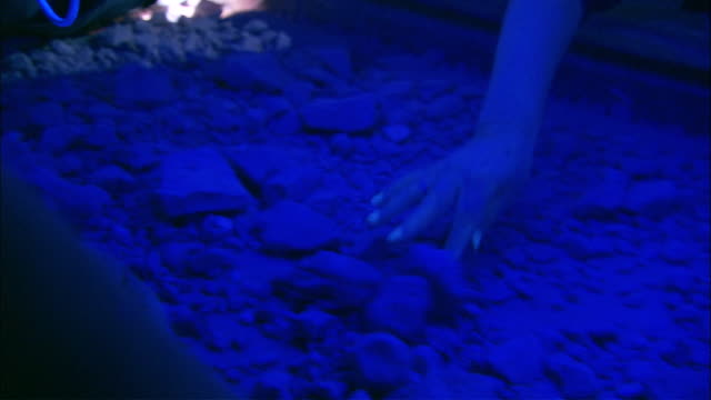 cu hands of  people sifting through dirt and rocks on conveyor belt in search of opals under ultra violet light, coober pedy, south australia, australia - luce ultravioletta video stock e b–roll
