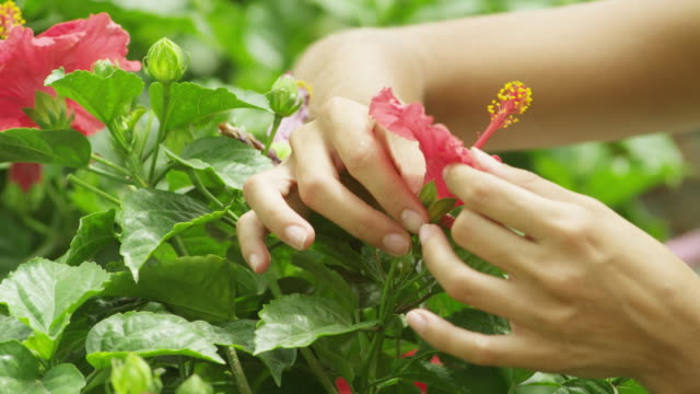 vídeos de stock e filmes b-roll de ecu hands of woman examining flower - estame