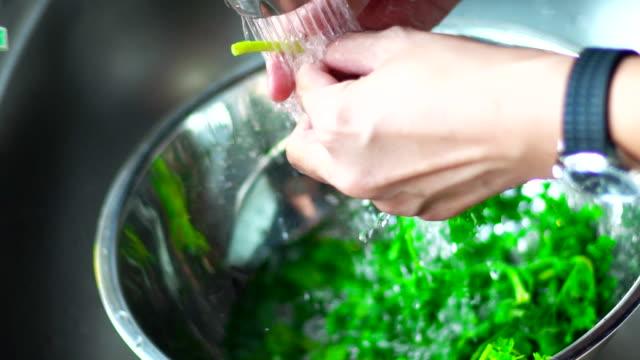 vídeos de stock e filmes b-roll de hands of woman washing cilantro at a kitchen sink. - lava loiças