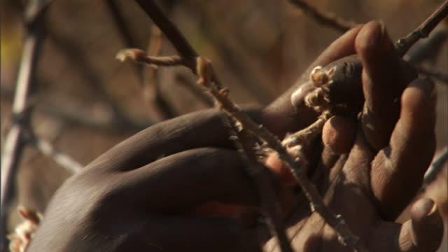 vidéos et rushes de hands pick berries from dry branches. - cueillir