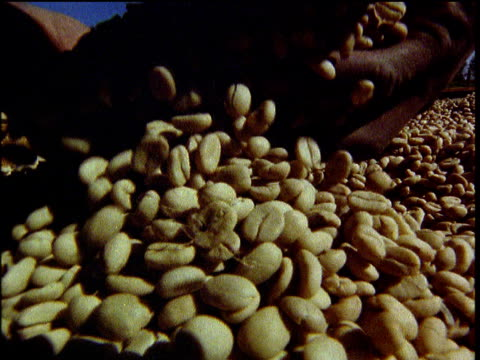 hands pick up dried coffee beans from huge pile and drop them slowly back onto pile trees in background africa - コーヒー豆点の映像素材/bロール