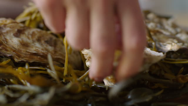 Hands place oysters on a bed of seaweed.