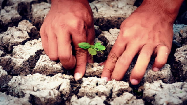 hands plant green seed - dry stock videos & royalty-free footage