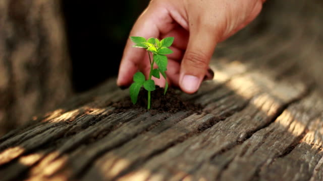 Hands Planting a Seed