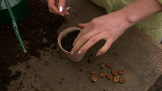 hands pot a seed pours water on it sweden. - beccuccio video stock e b–roll