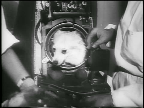 hands putting spacesuit helmet on dog / laika - first space traveler / soviet union / news. - 1957 stock-videos und b-roll-filmmaterial
