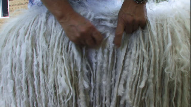 hands separate and straighten the corded fur of a mop dog. - combing stock videos & royalty-free footage