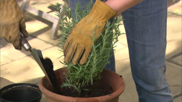 CU hands She puts soil in her pot