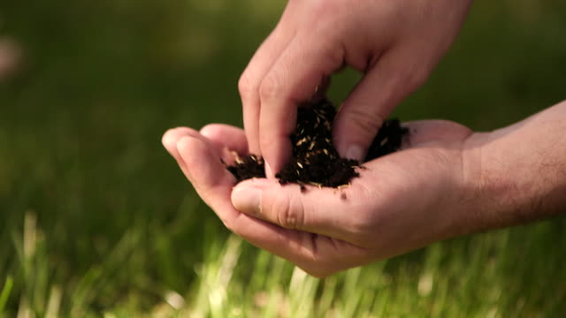 CU of hands sowing seeds of grass