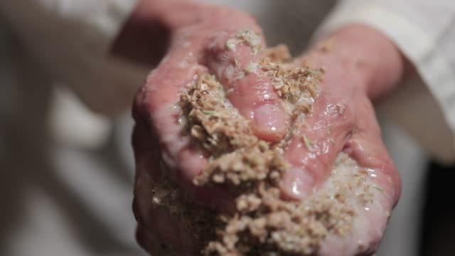 hands squeezing malted barley - squeezing stock videos & royalty-free footage