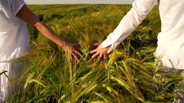 Hands touching wheat