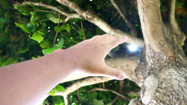 Hands under a tree reaching the light