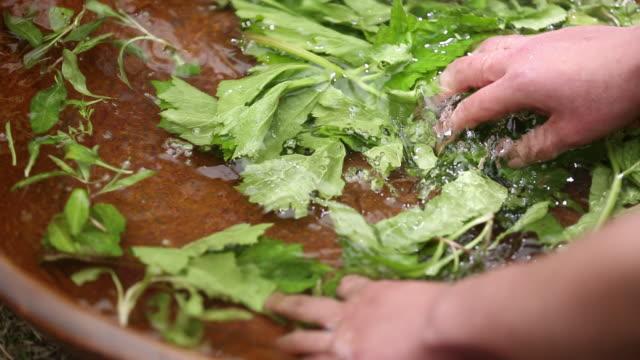 ecu r/f tu hands washing blade of grass in washing tub / seoul, south korea - washtub stock videos and b-roll footage