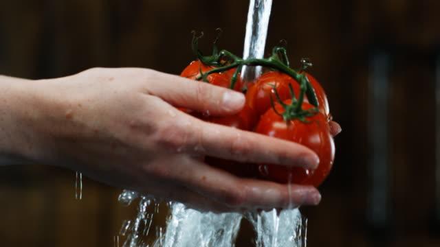 hands washing tomatoes - fem objekt bildbanksvideor och videomaterial från bakom kulisserna