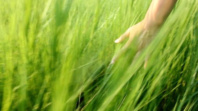 vídeos de stock e filmes b-roll de handtouchingtheearsofgrassinafield - objeto pontudo