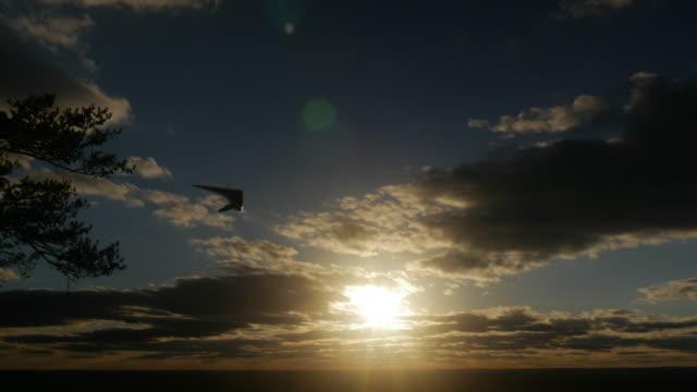 Hang Gliding at Sunset