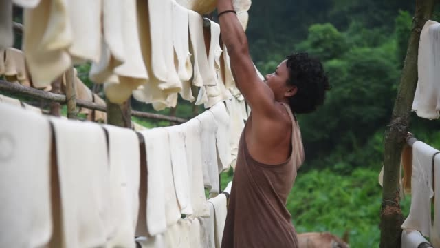 hanged sheets of rubber to dry at a rubber farm in thakurkuchi village, some 35 kms from gauhati in india on 04 november 2020. india is the third... - tropical climate stock videos & royalty-free footage