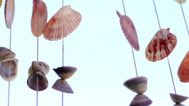 hanging decorative shells - animal shell stock videos & royalty-free footage