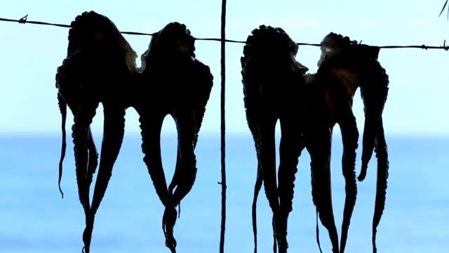 hanging octopus - tentacle sucker stock videos & royalty-free footage