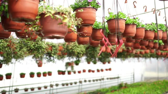 hanging pots in greenhouse - pot plant stock videos and b-roll footage