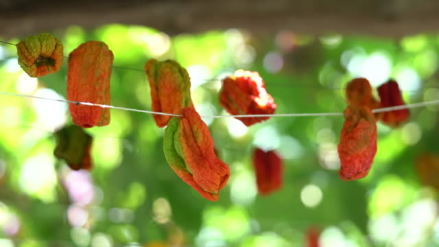 hanging red dry peppers - drying stock videos & royalty-free footage