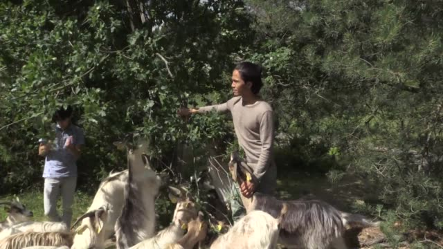 Hanif Mohammadi was surrounded by animals on his family's farm in rural Afghanistan when the Taliban killed his parents and forced him to flee
