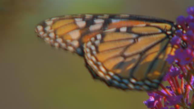 Hannibal, MissouriButterfly