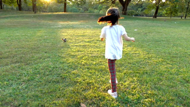 happiness asian little girl running to catch birds in the park - small stock videos & royalty-free footage