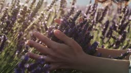 Happiness concept. A young woman gently holding lavender flowers in her hands and smelling the purple flowers during a bright sunny day. Slow motion shot