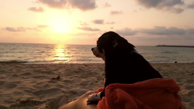 幸せ素敵な犬は、ビーチで夕日を見て良い時間を持っています - 冷たい点の映像素材/bロール