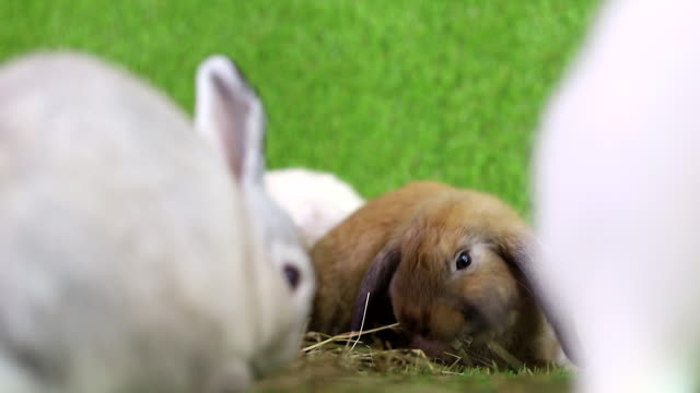 happiness rabbits eating glass and carrot on grass background. - animal costume stock videos & royalty-free footage
