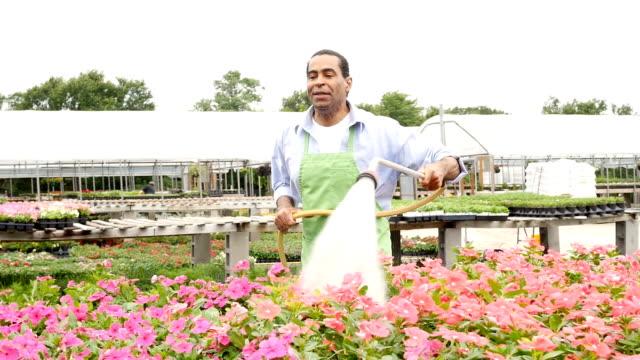 Happy African American garden center employee waters flowers