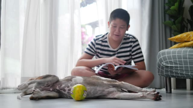 happy asian preteen boy reading book with cute dog in kids room. - overweight dog stock videos & royalty-free footage