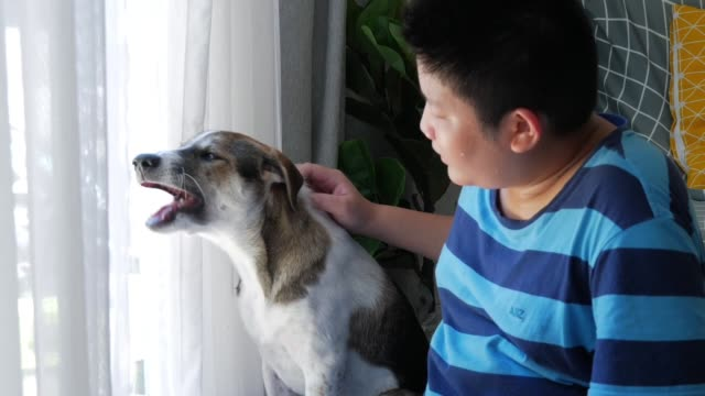 happy asian preteen boy touching and playing with his dog near window at home. - overweight dog stock videos & royalty-free footage