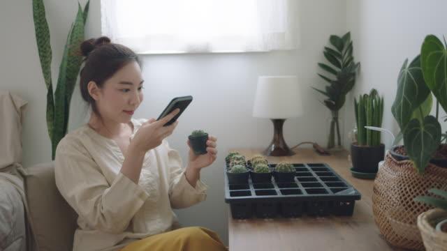 vidéos et rushes de femme asiatique heureuse photo graphisant cactus dans la chambre. - cactus pot