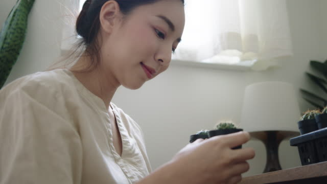 vidéos et rushes de femme asiatique heureuse plantant le cactus dans la chambre. - cactus pot